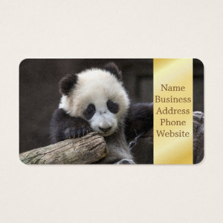 Baby panda climb a tree business card