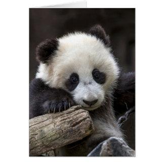 Baby panda climb a tree card