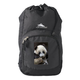 Baby panda climb a tree high sierra backpack