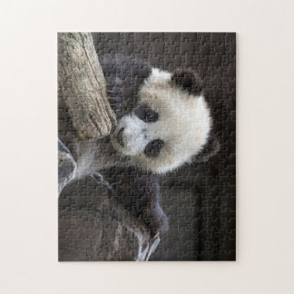 Baby panda climb a tree jigsaw puzzle