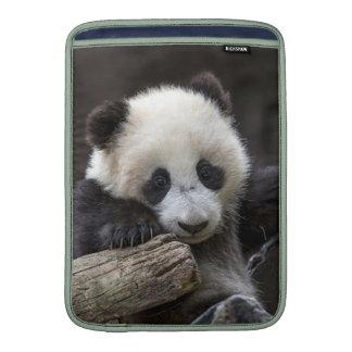 Baby panda climb a tree MacBook sleeve