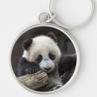 Baby panda climb a tree Silver-Colored round keychain