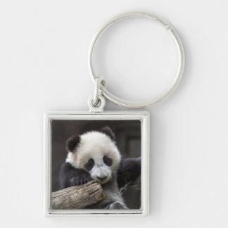 Baby panda climb a tree Silver-Colored square keychain