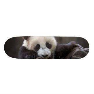 Baby panda climb a tree skateboard