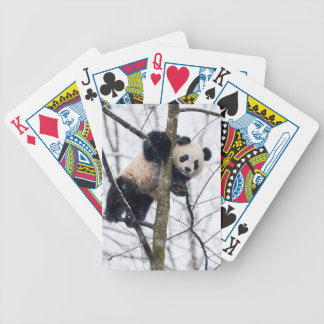 Baby Panda in Tree Bicycle Playing Cards