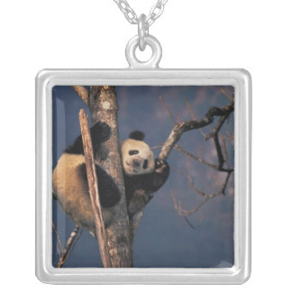 Baby panda playing on tree, Wolong, Sichuan Silver Plated Necklace