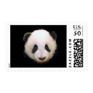 Baby Panda Postage Stamp