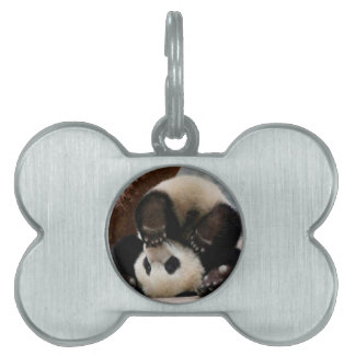 Baby pandas playing - baby panda  cute panda pet tag