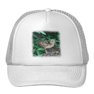 Baby Peacock Chick Baseball Hat