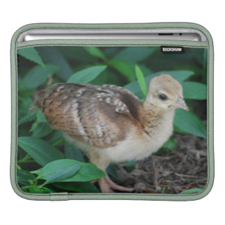 Baby Peacock Chick iPad Sleeve