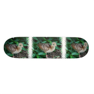 Baby Peacock Chick Skateboard