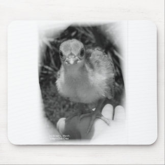 Baby peacock chick standing in a hand mouse pad