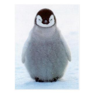 Baby Penguin Postcards
