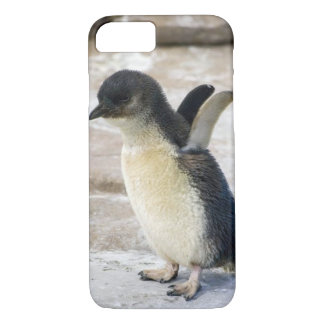 Baby Penguin Take-Off - iPhone 7 Cover