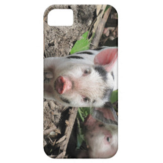 Baby Pig in Fiji iPhone 5 Cover