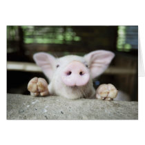 Baby Pig in Pen, Piglet Card