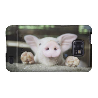 Baby Pig in Pen, Piglet Galaxy S2 Cover
