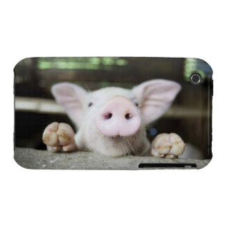 Baby Pig in Pen, Piglet Case-Mate iPhone 3 Cases