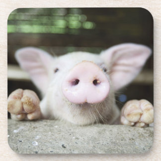 Baby Pig in Pen, Piglet Drink Coaster