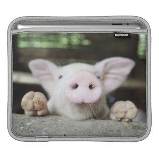 Baby Pig in Pen, Piglet iPad Sleeve