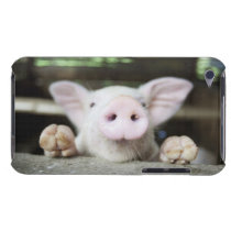 Baby Pig in Pen, Piglet iPod Case-Mate Case