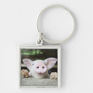 Baby Pig in Pen, Piglet Keychain
