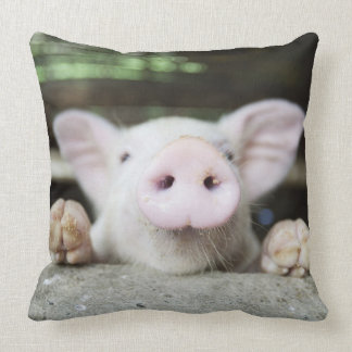 Baby Pig in Pen, Piglet Pillows