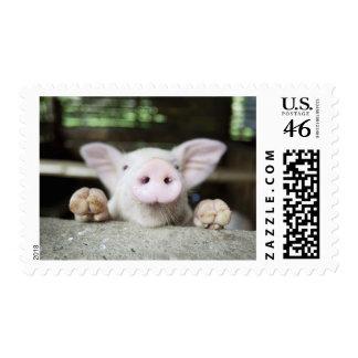 Baby Pig in Pen Piglet Postage Stamp