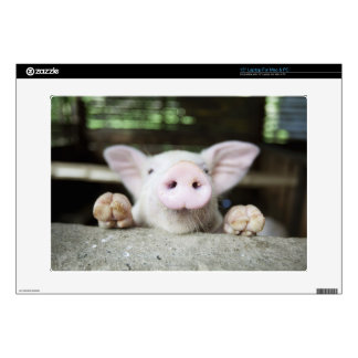 "Baby Pig in Pen, Piglet Skin For 15"" Laptop"