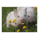 Baby Piglet in Field of Yellow Flowers Stationery Note Card