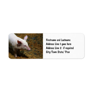 Baby Piglet Photograph for Pig Farmers Return Address Label