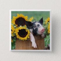 Baby Piglet Pig Button