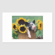 Baby Piglet Pig Rectangular Sticker