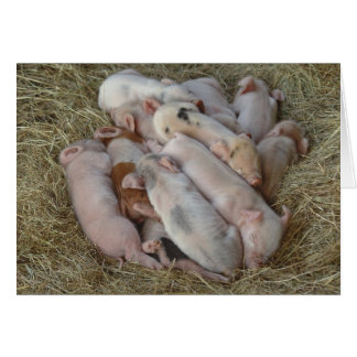 Baby Pigs, Piglets - Cute Baby Animals Card