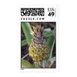 Baby Pineapple Postage Stamp