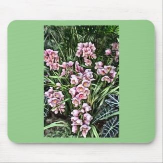 Baby Pink Orchids