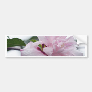 Baby Pink Rose of Sharon Bumper Sticker