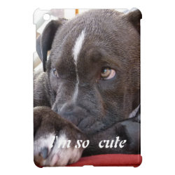 Case Savvy iPad Mini Glossy Finish Case with Bull Terrier Phone Cases design