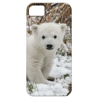 Baby Polar Bear iPhone 5 Cases
