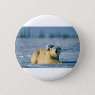 Baby Polar Bear Climbs On Mother Pinback Button