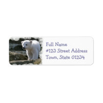 Baby Polar Bear Return Address Label