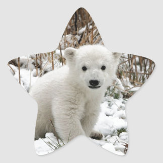 Baby Polar Bear Star Sticker
