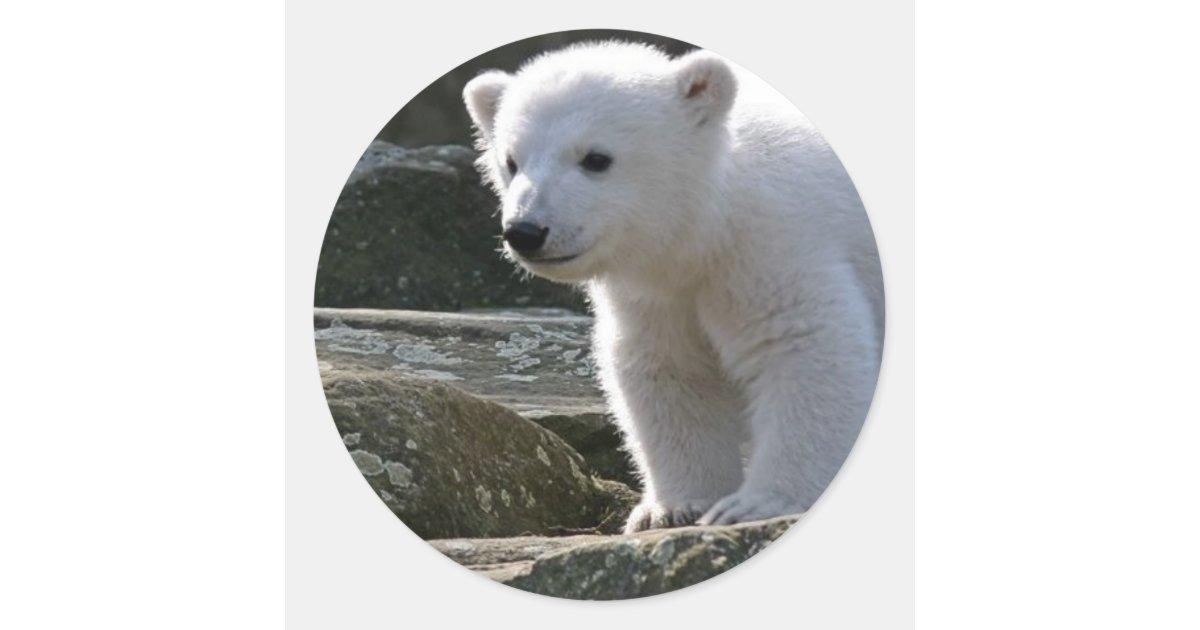 Baby Polar Bear Sticker Zazzle Com