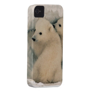 Baby Polar Bears Twins Animal Peace Love Destiny iPhone 4 Case-Mate Cases