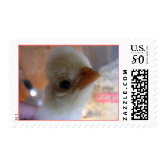 Baby Polish Chicken Postage