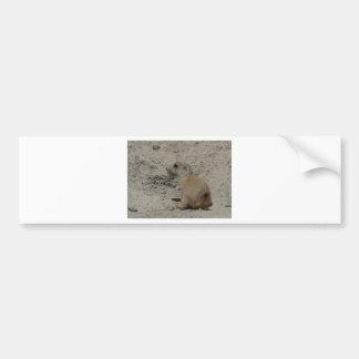 baby prairie dog bumper sticker