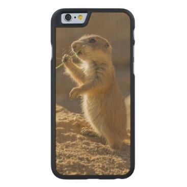 USA Themed Baby prairie dog eating, Arizona Carved Maple iPhone 6 Slim Case