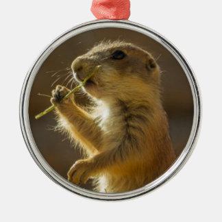 Baby prairie dog eating, Arizona Metal Ornament