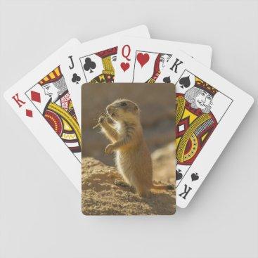 USA Themed Baby prairie dog eating, Arizona Playing Cards