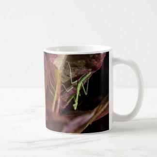 Baby Praying Mantis Mug Basic White Mug